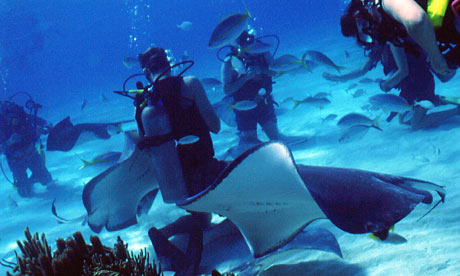 Divers-at-Stingray-City-001