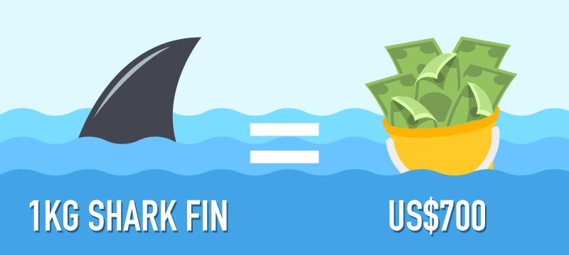 20160504-[Content-Graphics]-The-Economics-of-Sharks-001