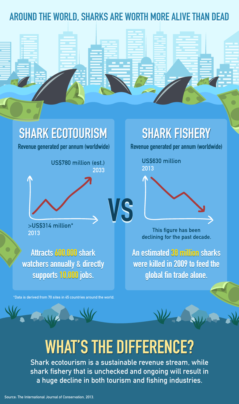20160504-[Content-Graphics]-The-Economics-of-Sharks-002