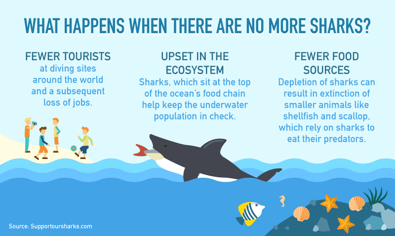 20160504-[Content-Graphics]-The-Economics-of-Sharks-004