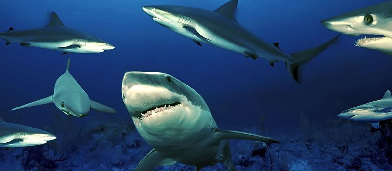 The Economics of Sharks: Why They're Worth More Alive Than Dead