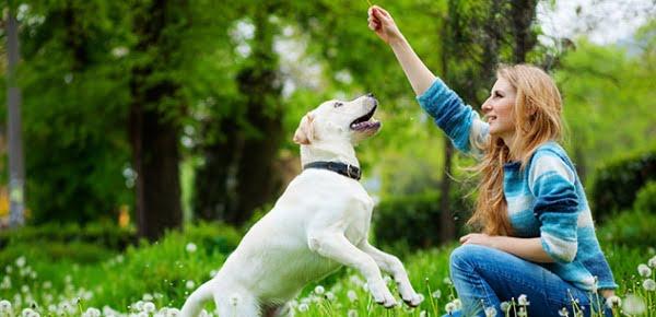 dog.playing.july4tips.thinkstock.101813317.632x353